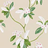 Oleander Wallpaper - Rose/Cream
