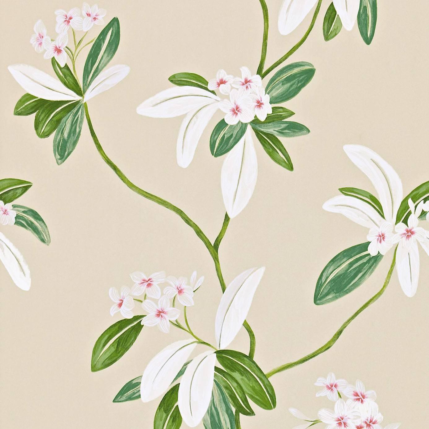 Oleander wallpaper rose cream 212130 sanderson for Cream rose wallpaper