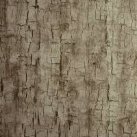 Tree Bark Wallpaper - Pewter