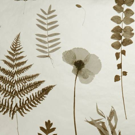 Clarke & Clarke Botanica Wallpapers Herbarium Wallpaper - Charcoal / Gold - W0091/02