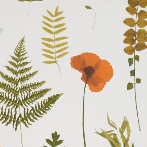 Clarke & Clarke Botanica Wallpapers Herbarium Wallpaper - Multi / Ivory - W0091/04