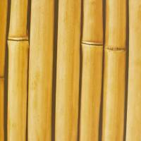 Bamboo Buzz Wallpaper - Hay