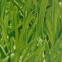 Grassy Meadow Wallpaper - Grass