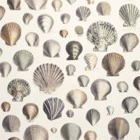 Captain Thomas Browns Shell Wallpaper - Oyster