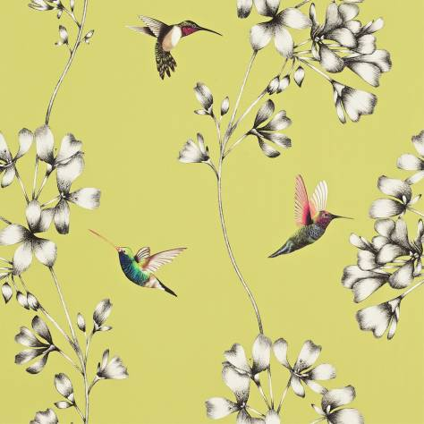 Harlequin Amazilia Wallpapers Amazilia Wallpaper - Gooseberry - 111061